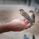 bird-818045__180