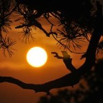 sunset-396633__180